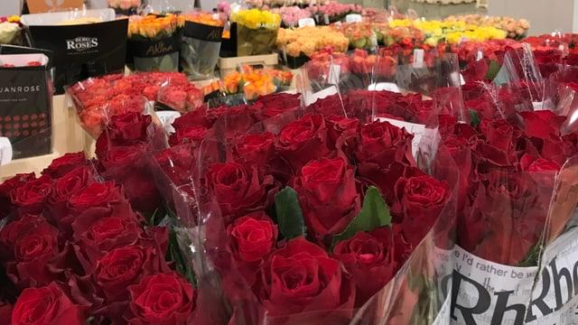 Blick in eine Lagerhalle eines Blumengrosshändlers mit vielen Sträussen Rosen.