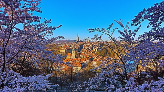 Die Stadt Bern und ihre Blüten