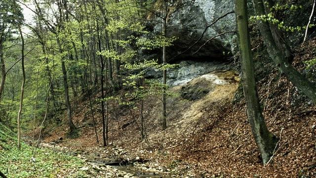 Höhle im Wald.