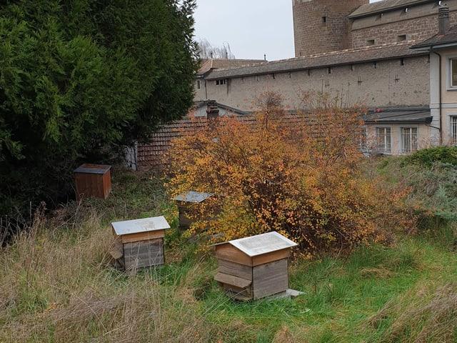 Bienenstöcke auf einer naturnahen Wiese