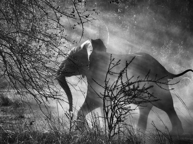 Ein Elefant im Licht.