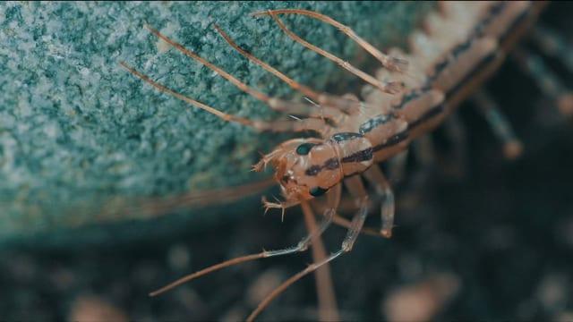 Super Bio Hero: Spinnenläufer (6/12)