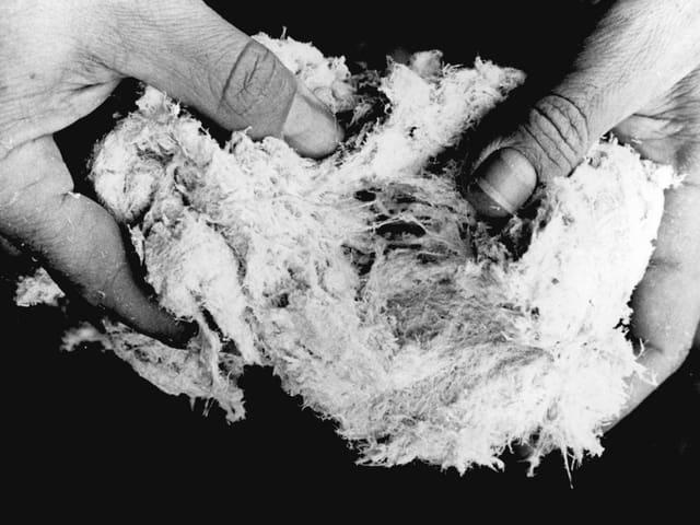 Asbestfasern, undatierte Aufnahme.