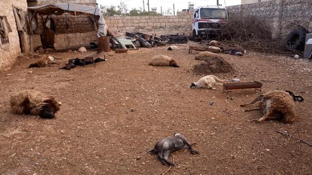 Tierkadaver liegen auf der Strasse eines syrischen Dorfs nahe Aleppo.