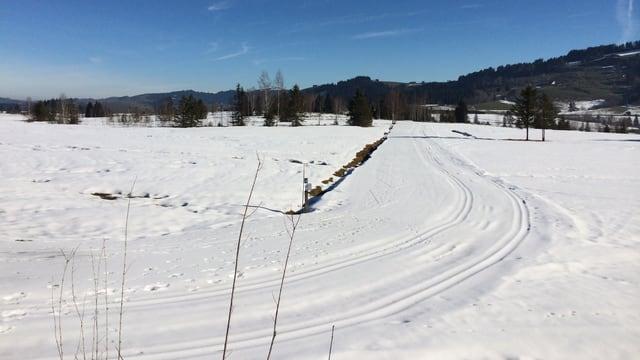 Winterlandschaft mit Langlaufloipe.