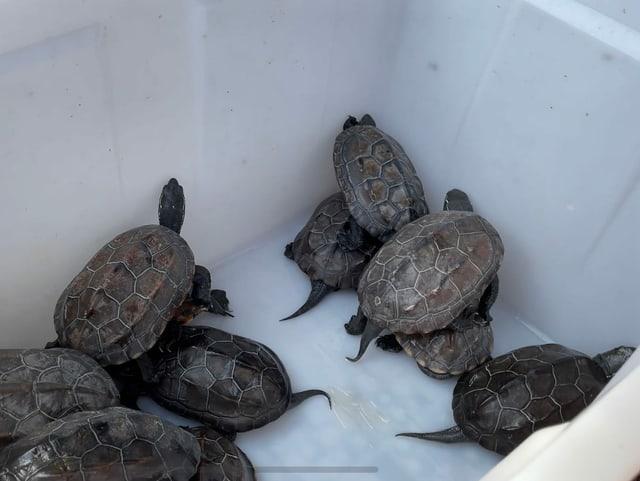 Schildkröten in einem weissen Behälter auf dem neuen Markt.