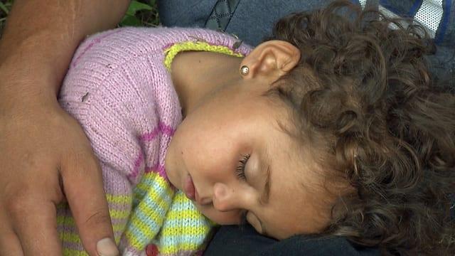Die zweijährige Rosa liegt im Waldstück an der ungarisch-serbischen Grenze.(julien cassez)