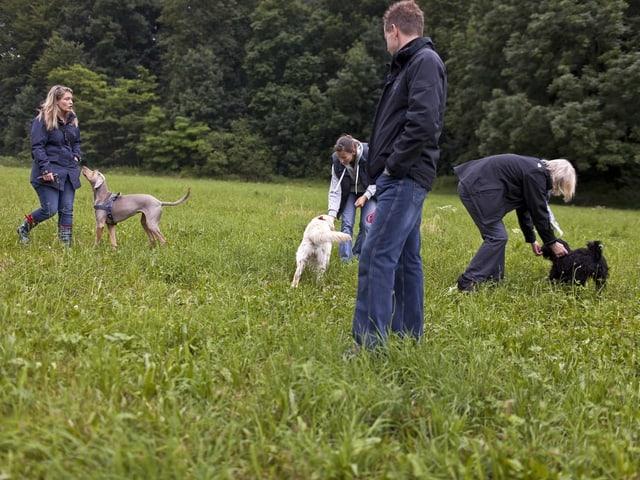 Mehrere Menschen mit Hunden auf einem Feld.