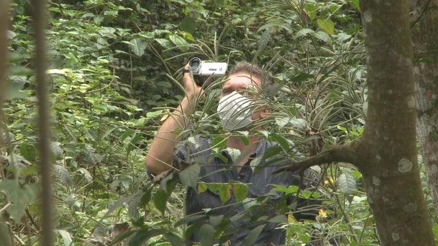 Im Urwald trägt der Forscher einen Mundschutz, damit er keine Krankheitserreger aus anderen Regionen übertragen kann.