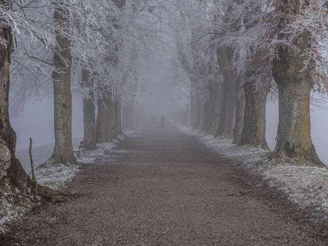 Reif lagert sich an Bäumen und Wegen ab.