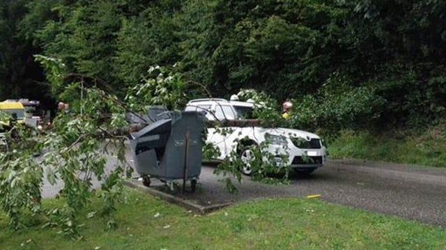 Baum auf Auto, gebremst durch Container.