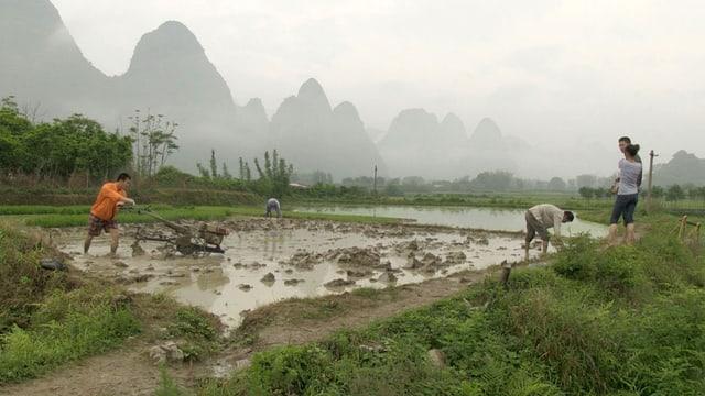 Menschen stehen im knöcheltiefen Wasser, umgeben von grünen Felder, dahinter Karstgebirge.