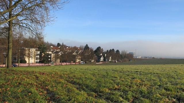 Wiese auf dem Bruderholz, am linken Bildrand sieht man einen Baum und im Hintergrund Häuser der Giornicostrasse.