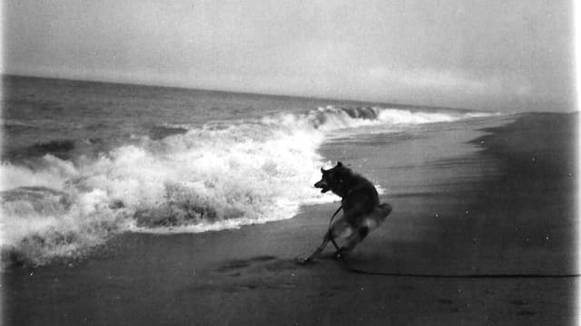 Ein verblichenes Polaroidfoto mit einem Hund am Strand.