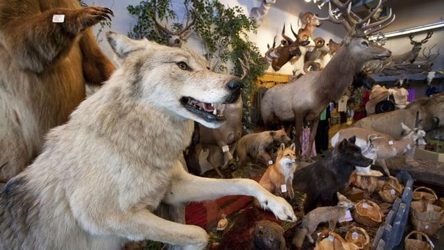 Ausgestopfte Tiere. Darunter ein Wolf, ein Bär und ein Hirsch.