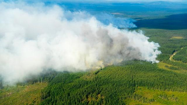 Rauchwolken und Wald