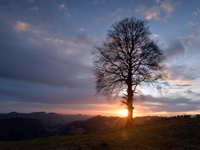 Sonne, die hinter Baum hervor scheint.