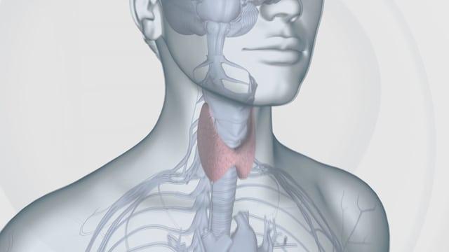 Grafik zur Schilddrüse.