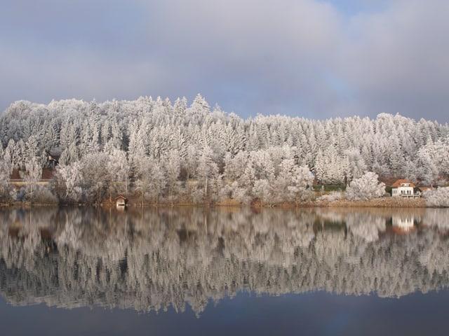 Der Wald auf der anderen Seite des Sees ist mit Raureif überzogen. Der winterlich weisse Wald spiegelt sich im See.