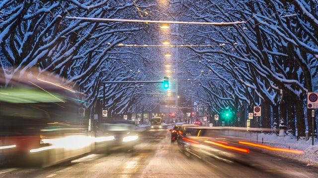 Baumallee, verschneit, Verkehr