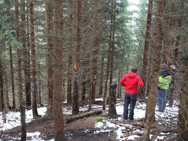 Schälschaden an den Bäumen im Wald.