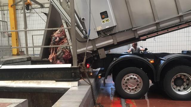 Ein Lastwagen lädt tote Tiere und Schlachtabfälle ab