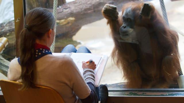 Ein Orang-Utan sitzt hinter einer Scheibe und wird von einer Frau abgezeichnet.