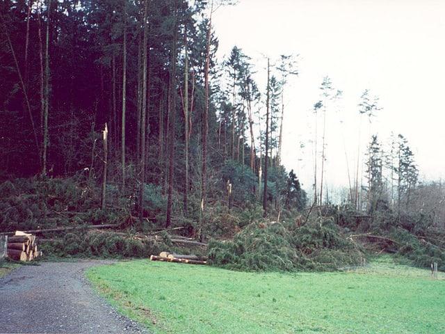 umgeknickte Bäume