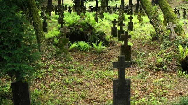 Grabsteine zwischen vielen Bäumen.