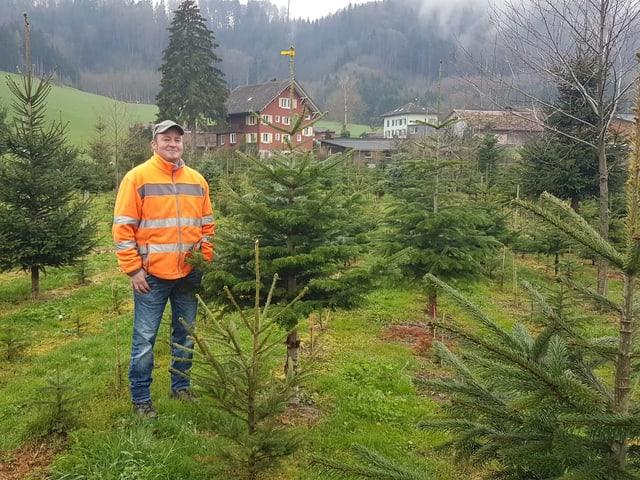 Mann auf Christbaumplantage