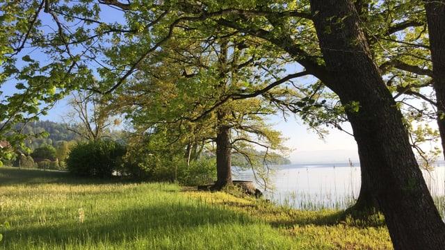 Landschaftsaufnahme am Ufer des Zugersees.