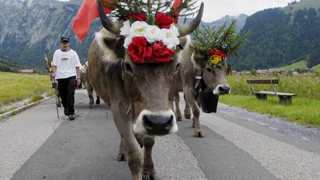 Video «Tiergeschichten (2/10): Tiere in den Bergen» abspielen