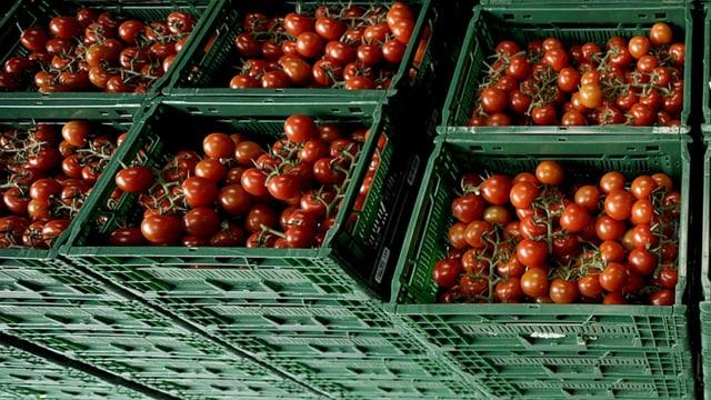 Tomaten in Kisten.