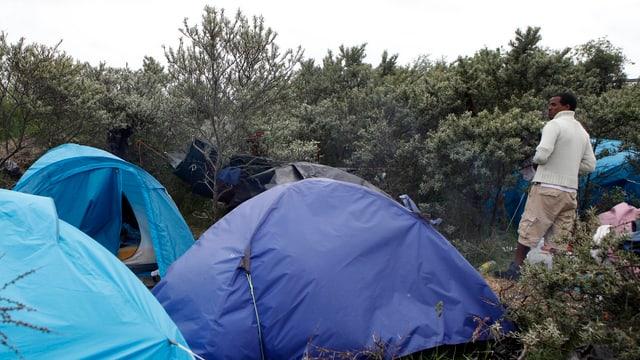 Zelte im Gebüsch.