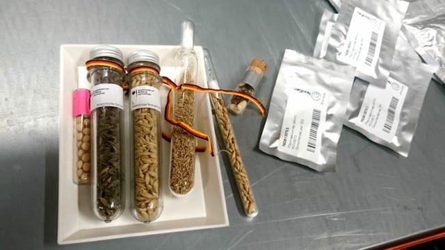 Auf einem Tisch sind verschiedene Samen in Reagenzgläsern zu sehen.