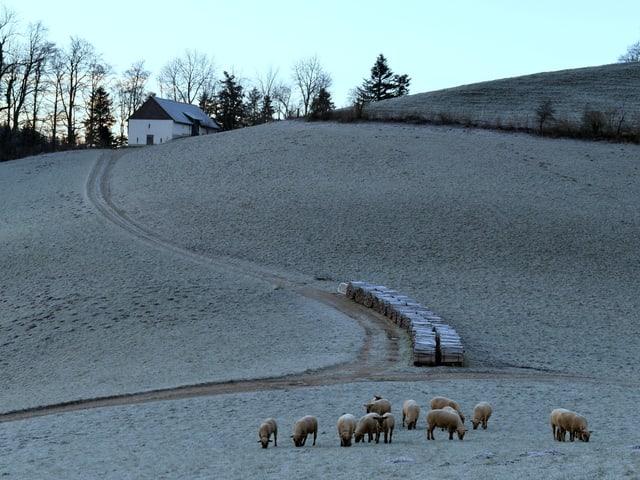 Reif liegt über der Landschaft. Zu sehen sind auch Schafe und ein Bauernhaus.