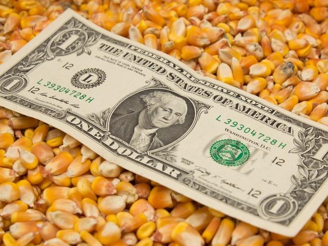 Eine Ein-Dollarnote liegt auf Maiskörnern.