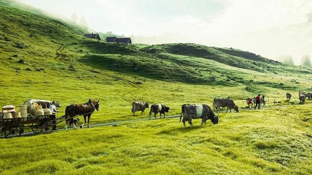 Alpaufzug mit Kühen