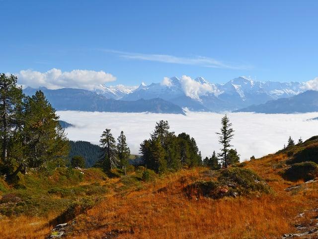 Nebelmeer und darüber sonniges Wanderwetter.