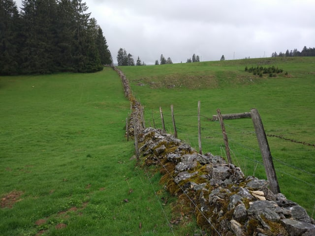Eine Trockensteinmauer trennt zwei Weiden.
