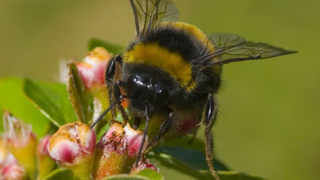 Streptomycin vernichtet weiter Honig