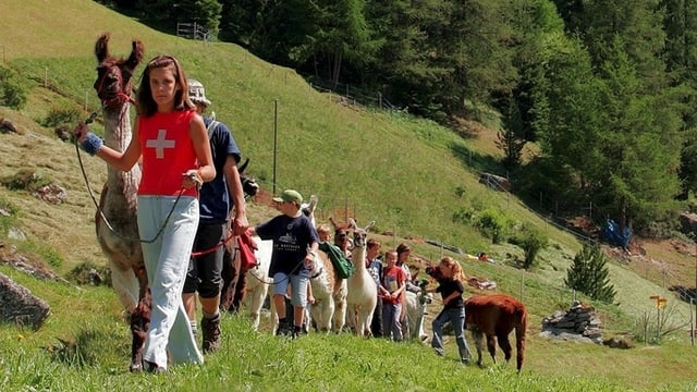 Cira set uffants van in davos l'auter cun lur lamas - trekking cun lamas.