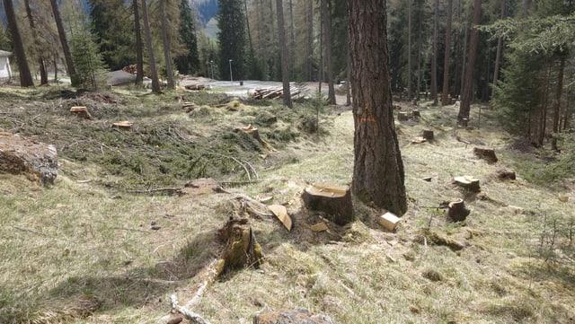 Vista sin las plantas pinadas e la via d'alp a Savognin.