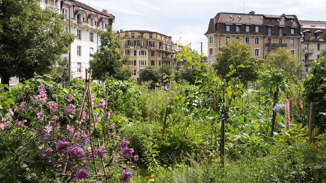 Ein Garten mit violetten Blumen und vielen Büschen.
