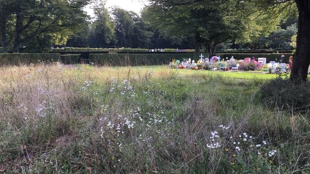 Blick auf die kleinen Gräber auf dem Friedhof.