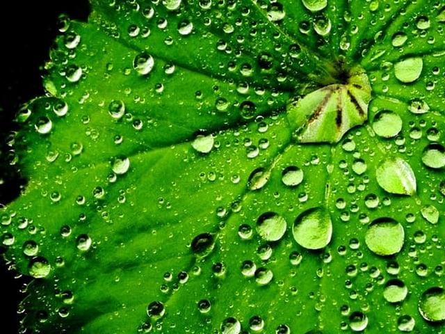Ein Blatt mit Regentropfen.