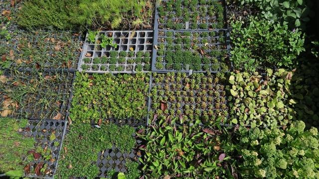 Pflanzenbeet mit verschiedenen Pflanzen.