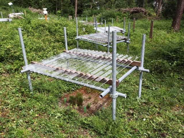 Plexiglasrillen über jungen Bäumen vermindern die Versorgung mit Regenwasser.