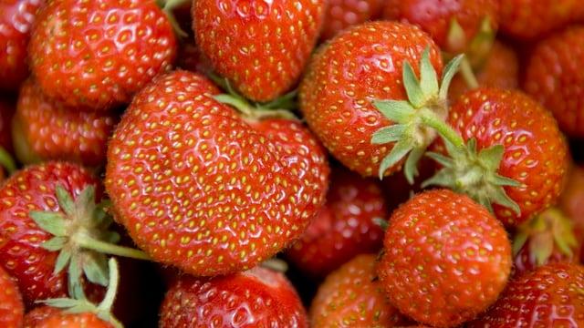 Viele Erdbeeren.