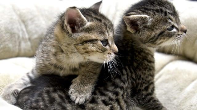 Zwei junge Katzen